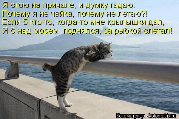 Котоматрица: Я стою на причале, и думку гадаю: Почему я не чайка, почему не летаю?! Если б кто-то, когда-то мне крылышки дал, Я б над морем  поднялся, за рыбко