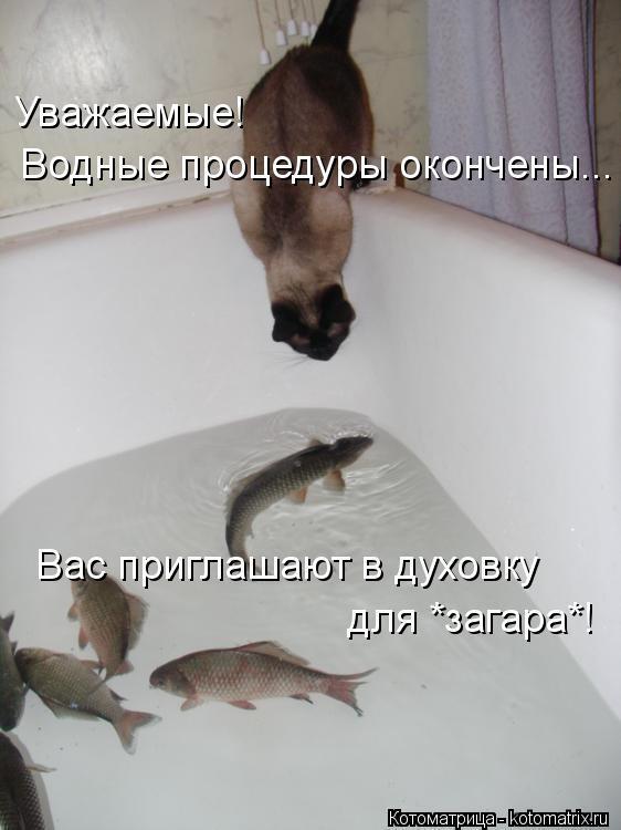 Котоматрица: Уважаемые! Водные процедуры окончены... Вас приглашают в духовку  для *загара*!