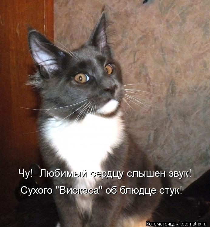 "Котоматрица: Чу!  Любимый сердцу слышен звук! Сухого ""Вискаса"" об блюдце стук!"