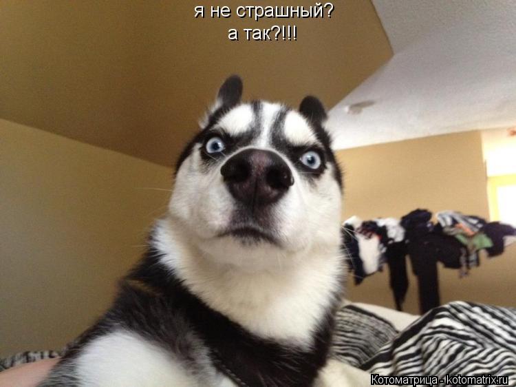 Котоматрица: я не страшный? а так?!!!