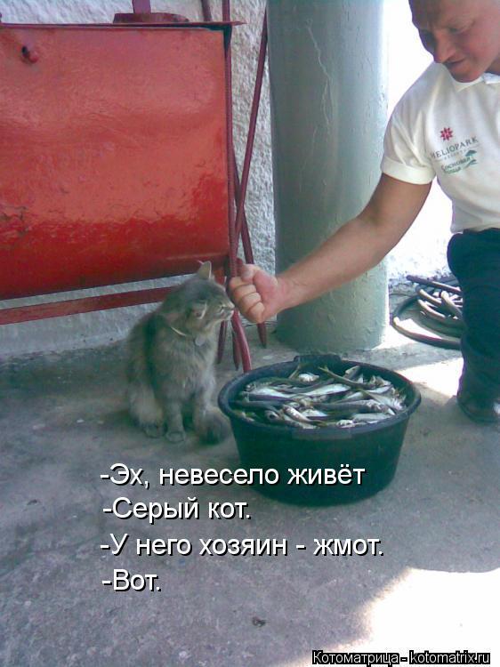 Котоматрица: -Эх, невесело живёт  -Серый кот.  -У него хозяин - жмот.  -Вот.