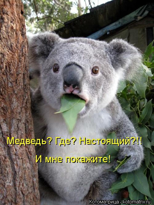 Котоматрица: Медведь? Где? Настоящий?!! И мне покажите!