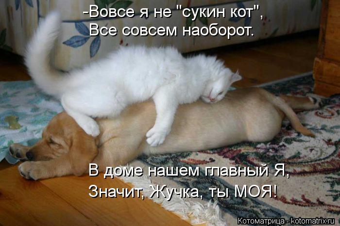 """Котоматрица: Все совсем наоборот. -Вовсе я не """"сукин кот"""", В доме нашем главный Я, Значит, Жучка, ты МОЯ!"""