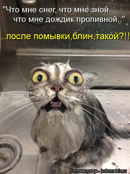 """Котоматрица: ..после помывки,блин,такой?!! """"Что мне снег, что мне зной что мне дождик проливной.."""""""