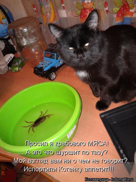 Котоматрица: Просил я крабового МЯСА! А это что шуршит по тазу? Мой взгляд вам ни о чем не говорит? Испортили Котенку аппетит!!!