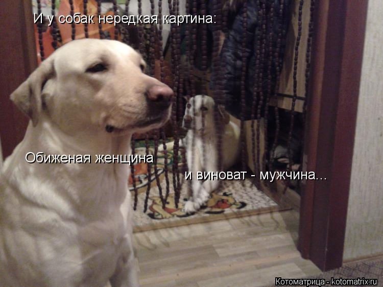 Котоматрица: И у собак нередкая картина: Обиженая женщина и виноват - мужчина...