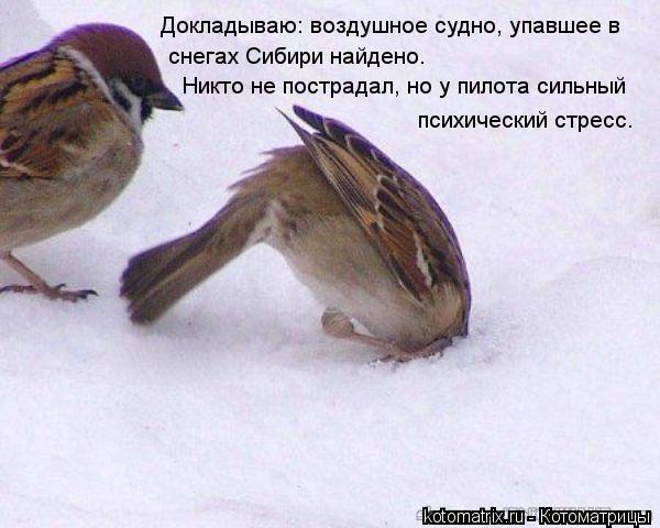 Котоматрица: Докладываю: воздушное судно, упавшее в  снегах Сибири найдено.  Никто не пострадал, но у пилота сильный  психический стресс.