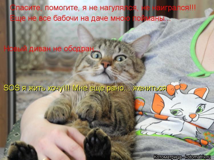 Котоматрица: Спасите, помогите, я не нагулялся, не наигрался!!! Еще не все бабочи на даче мною пойманы... SOS я жить хочу!!! Мне еще рано... жениться Новый диван