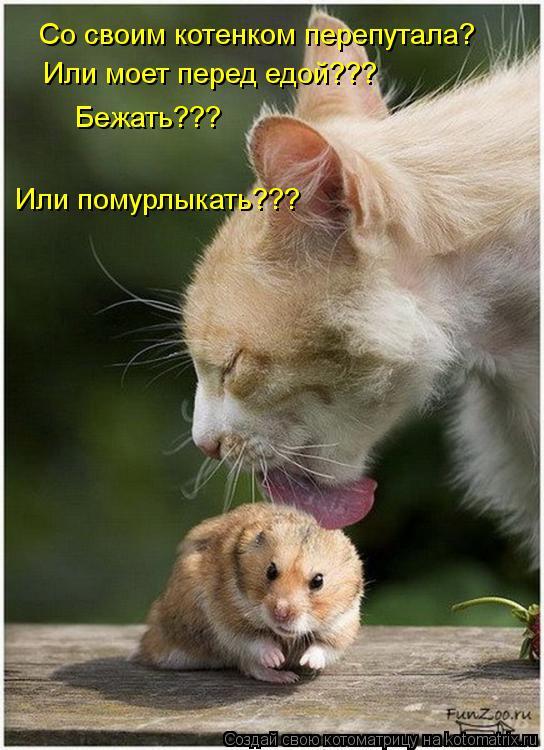 Котоматрица: Со своим котенком перепутала? Или моет перед едой??? Бежать??? Или помурлыкать???