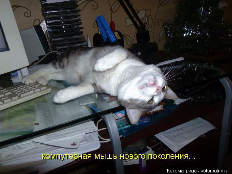 Котоматрица: компутерная мышь нового поколения...