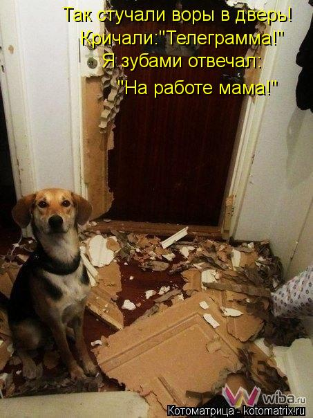 """Котоматрица: Так стучали воры в дверь! Кричали:""""Телеграмма!"""" Я зубами отвечал: """"На работе мама!"""""""