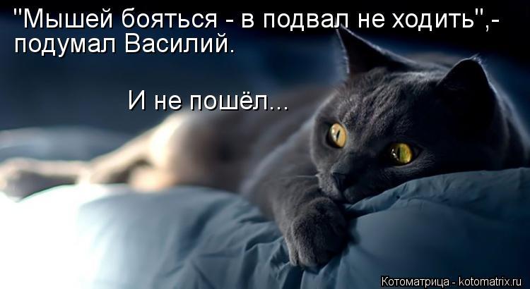 """Котоматрица: """"Мышей бояться - в подвал не ходить"""",- подумал Василий. И не пошёл..."""
