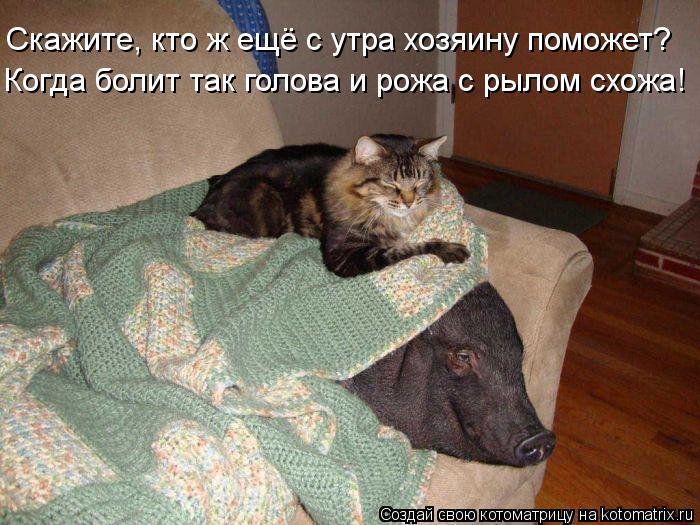 Котоматрица: Скажите, кто ж ещё с утра хозяину поможет? Когда болит так голова и рожа с рылом схожа!