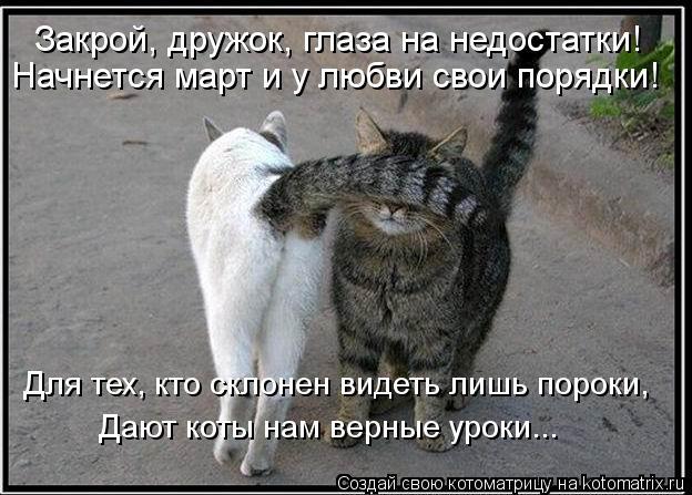 Котоматрица: Закрой, дружок, глаза на недостатки! Начнется март и у любви свои порядки! Для тех, кто склонен видеть лишь пороки, Дают коты нам верные уроки