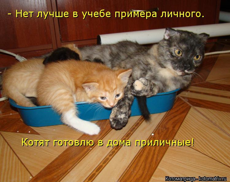 Котоматрица: - Нет лучше в учебе примера личного. Котят готовлю в дома приличные!