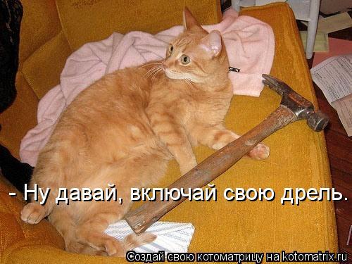 Котоматрица: - Ну давай, включай свою дрель.