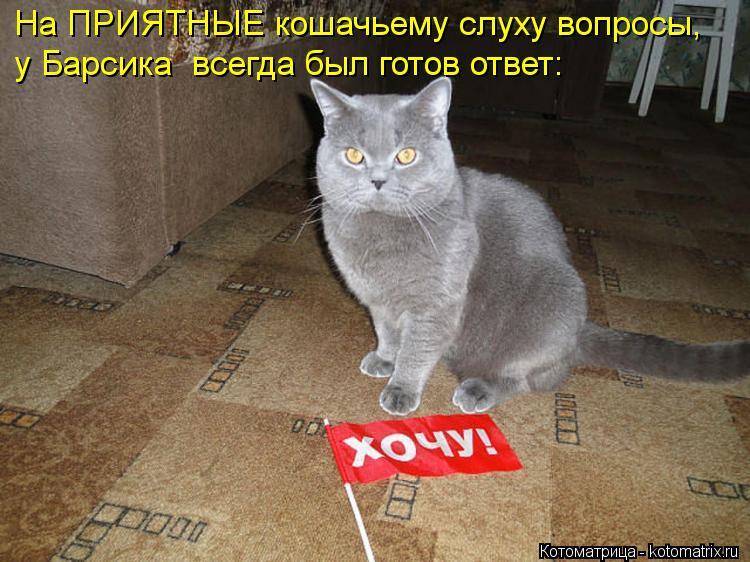 Котоматрица: у Барсика  всегда был готов ответ: На ПРИЯТНЫЕ кошачьему слуху вопросы,