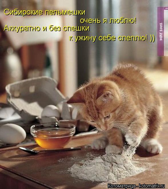 Котоматрица: Сибирские пельмешки  очень я люблю! Аккуратно и без спешки к ужину себе слеплю! ))