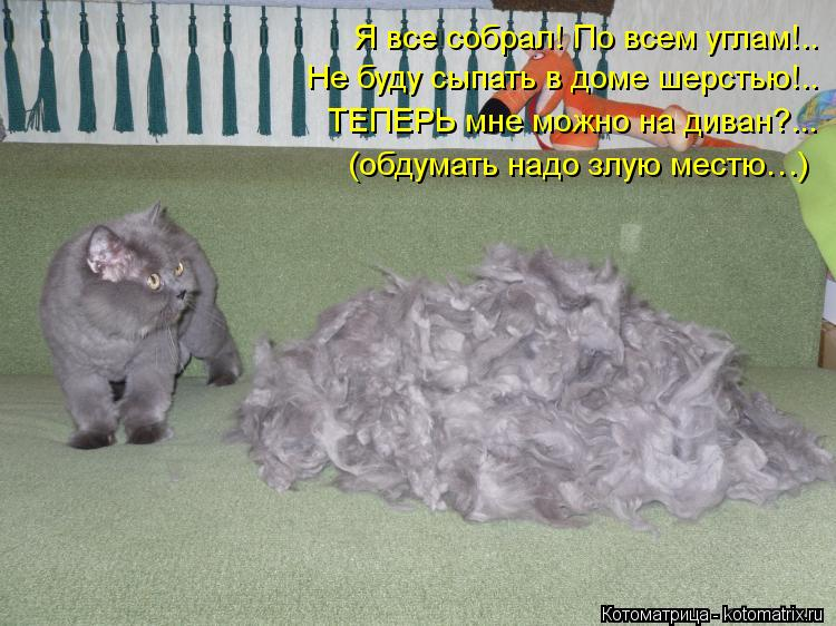 Котоматрица: Я все собрал! По всем углам!.. Не буду сыпать в доме шерстью!.. ТЕПЕРЬ мне можно на диван?...  (обдумать надо злую местю…)