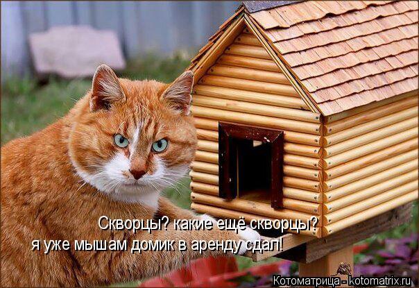 Котоматрица: Скворцы? какие ещё скворцы? я уже мышам домик в аренду сдал!