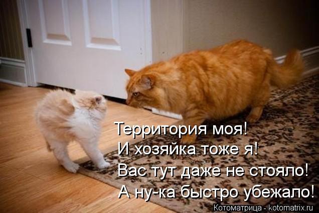 Котоматрица: Территория моя! И хозяйка тоже я! Вас тут даже не стояло! А ну-ка быстро убежало!