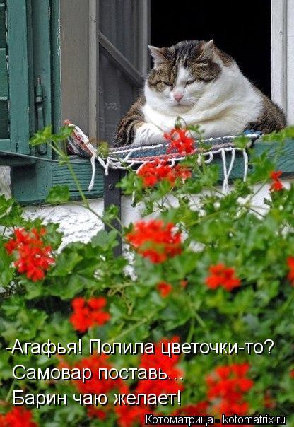 Котоматрица: -Агафья! Полила цветочки-то?  Самовар поставь... Барин чаю желает!