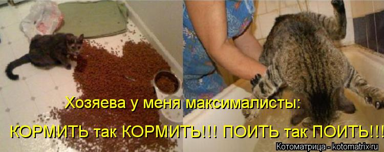 Котоматрица: Хозяева у меня максималисты: КОРМИТЬ так КОРМИТЬ!!! ПОИТЬ так ПОИТЬ!!!
