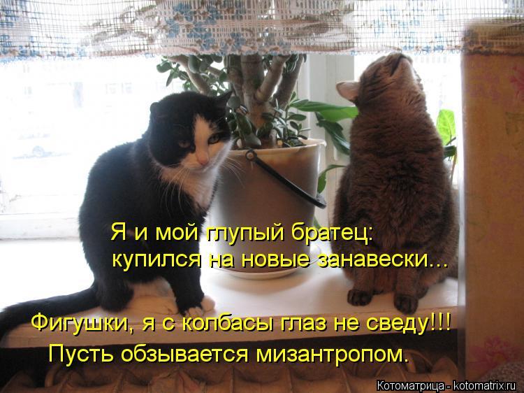 Котоматрица: Я и мой глупый братец: купился на новые занавески... Фигушки, я с колбасы глаз не сведу!!! Пусть обзывается мизантропом.