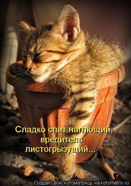 Котоматрица: Сладко спит наглющий,  вредитель листогрызущий...
