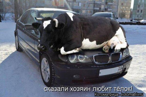 Котоматрица: сказали хозяин любит тёлок!