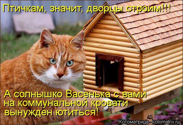 Котоматрица: Птичкам, значит, дворцы строим!!! А солнышко Васенька с вами на коммунальной кровати  вынужден ютиться!