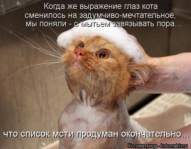 Котоматрица: Когда же выражение глаз кота сменилось на задумчиво-мечтательное, мы поняли - с мытьем завязывать пора... что список мсти продуман окончател