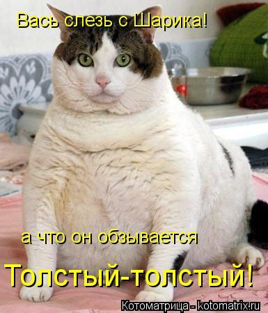 Котоматрица: Вась слезь с Шарика! а что он обзывается Толстый-толстый!