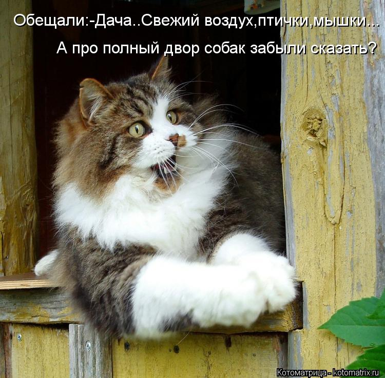 Котоматрица: Обещали:-Дача..Свежий воздух,птички,мышки... А про полный двор собак забыли сказать?