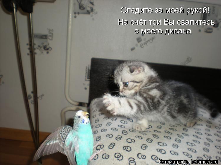 Котоматрица: На счёт три Вы свалитесь  с моего дивана Следите за моей рукой!