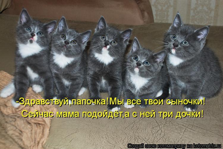 Котоматрица: -Здравствуй,папочка!Мы все твои сыночки! Сейчас мама подойдёт,а с ней три дочки!
