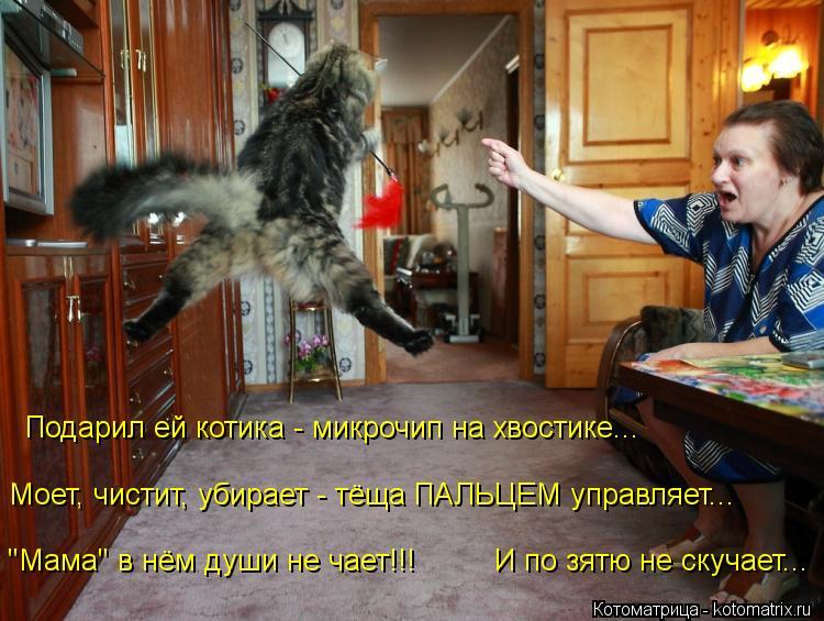 """Котоматрица: Моет, чистит, убирает - тёща ПАЛЬЦЕМ управляет... Подарил ей котика - микрочип на хвостике... """"Мама"""" в нём души не чает!!!         И по зятю не скучает"""
