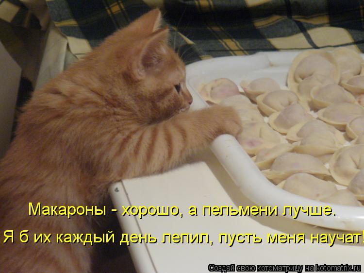 Котоматрица: Макароны - хорошо, а пельмени лучше. Я б их каждый день лепил, пусть меня научат!