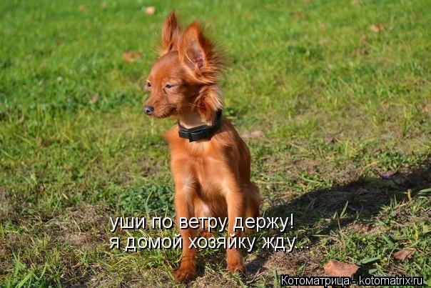 Котоматрица: уши по ветру держу! я домой хозяйку жду...