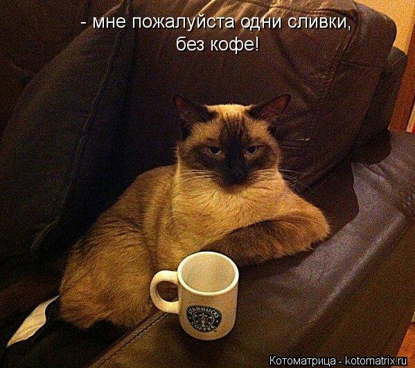Котоматрица: - мне пожалуйста одни сливки, без кофе!