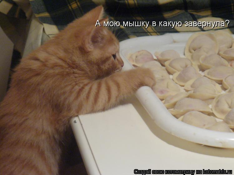 Котоматрица: А мою мышку в какую завернула?