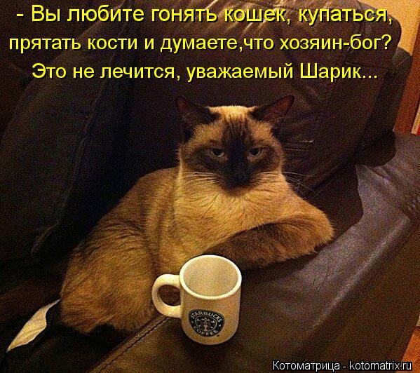 Котоматрица: - Вы любите гонять кошек, купаться, прятать кости и думаете,что хозяин-бог? Это не лечится, уважаемый Шарик...