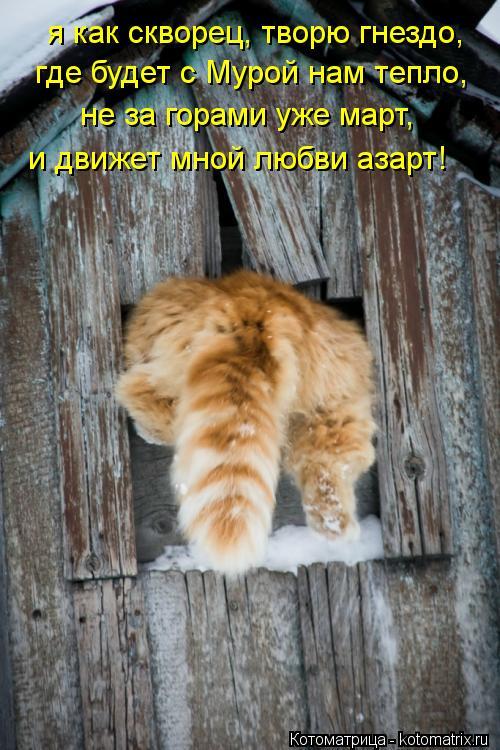 Котоматрица: я как скворец, творю гнездо, где будет с Мурой нам тепло, не за горами уже март, и движет мной любви азарт!