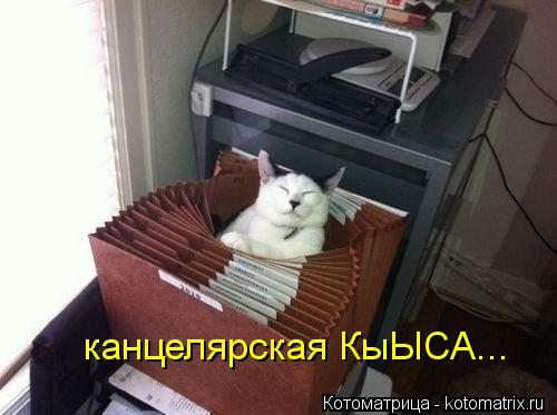Котоматрица: канцелярская КыЫСА...