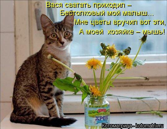 Котоматрица: Бестолковый мой малыш… Вася сватать приходил –  Мне цветы вручил вот эти, А моей  хозяйке – мышь!