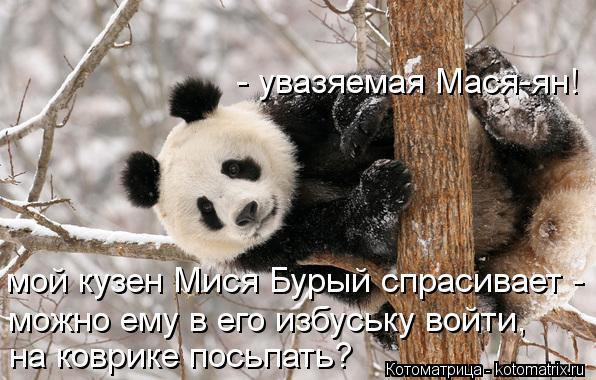Котоматрица: - увазяемая Мася-ян!  мой кузен Мися Бурый спрасивает -  можно ему в его избуську войти,  на коврике посьпать?