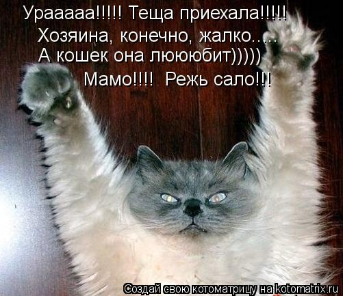 Котоматрица: Урааааа!!!!! Теща приехала!!!!! Хозяина, конечно, жалко..... А кошек она люююбит))))) Мамо!!!!  Режь сало!!!