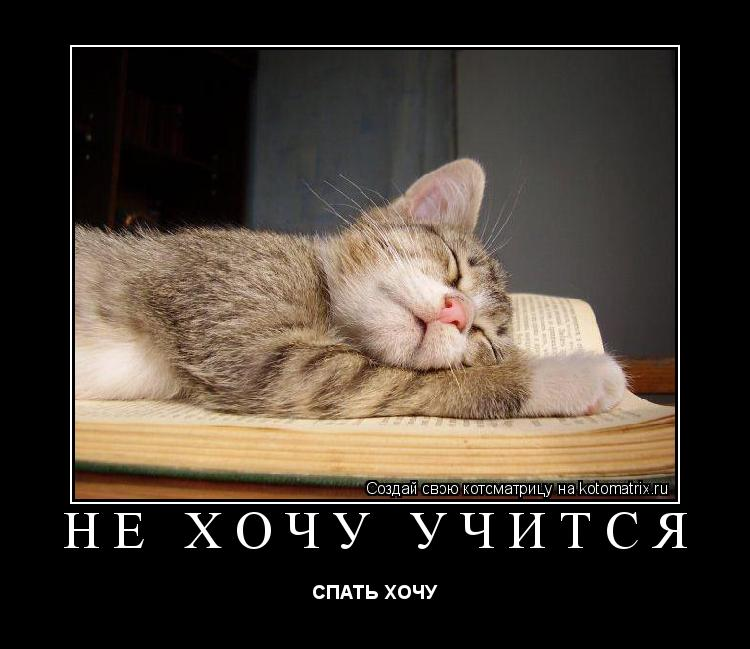 Стих про кота спящего