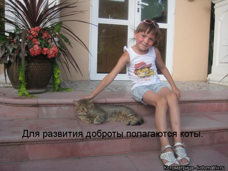 Котоматрица: Для развития доброты полагаются коты.