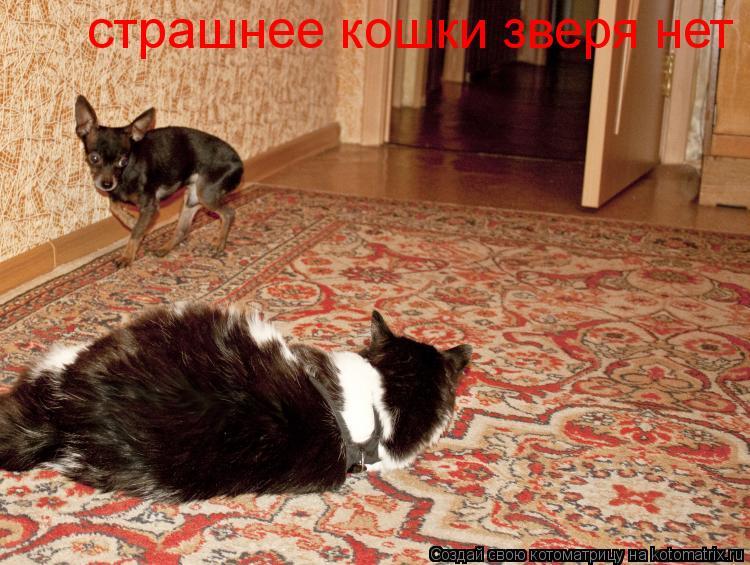 Котоматрица: страшнее кошки зверя нет
